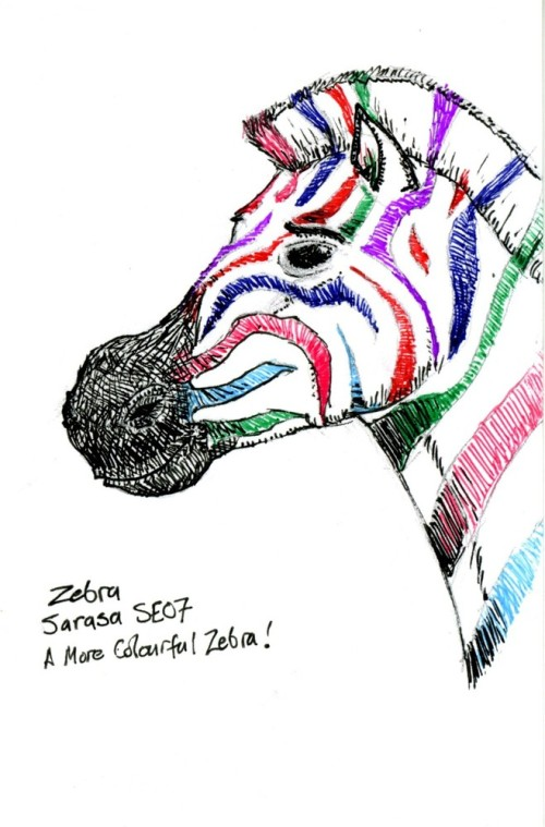 Zebra007